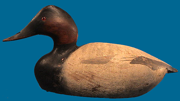 "Rare ""open-water"" drake Canvasback by the Ward Brothers 1920-30"