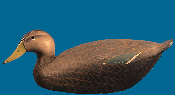 Superb Ward Brothers Black Duck