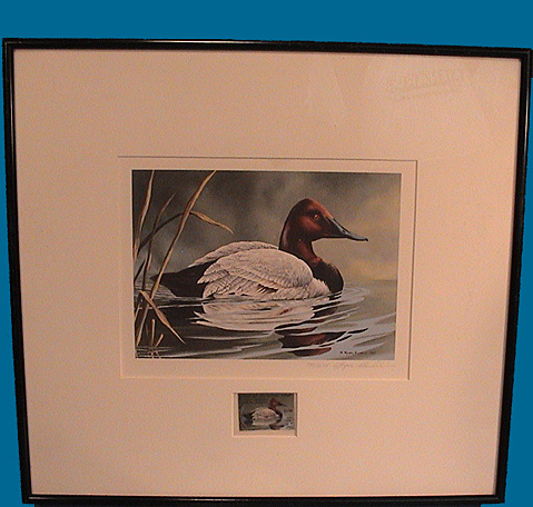 Canvasback MD print