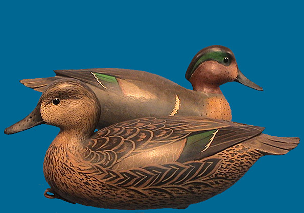 Bob White Green-Winged Teal