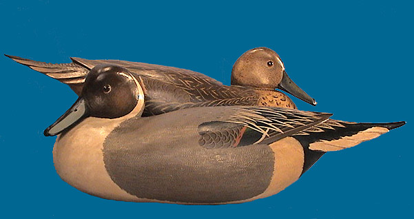 Bob White Low Head Pintail pair