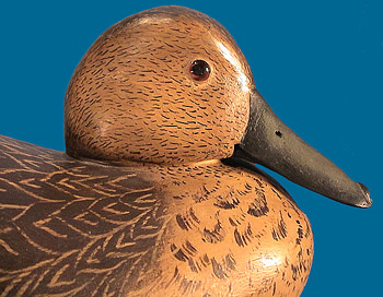 Bob White hen Pintail