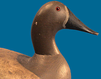 Joseph Kempinger Canvasback head shot